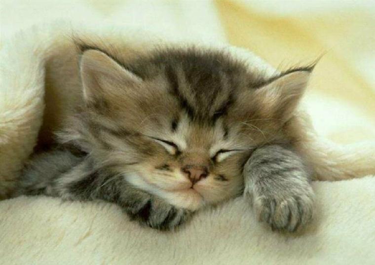 chat-dans-couverture