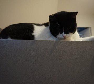 Lou, le chat de Nadège