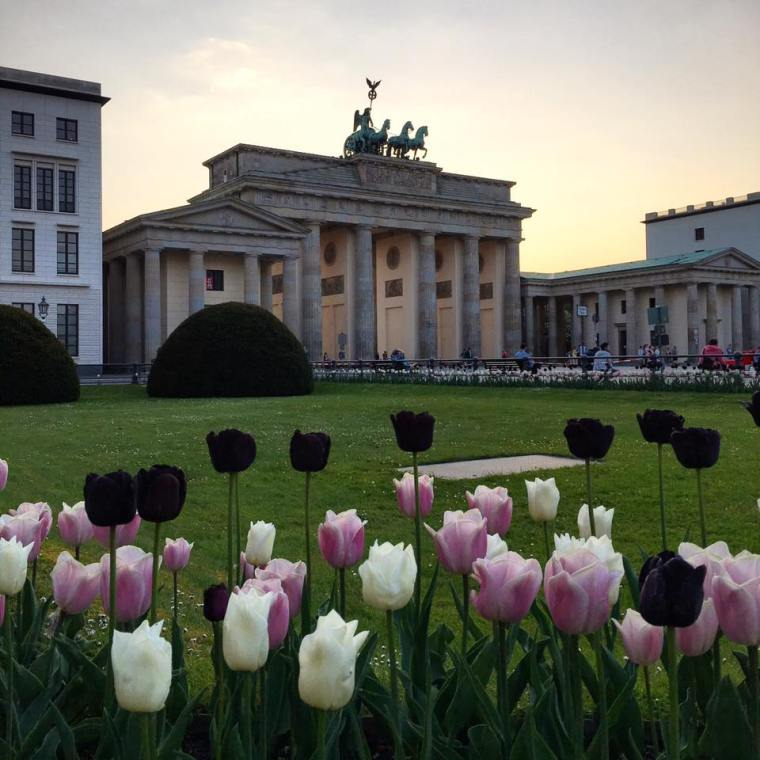 berlin-tulipes