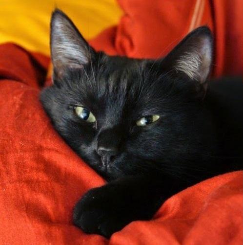 chat-noir-c