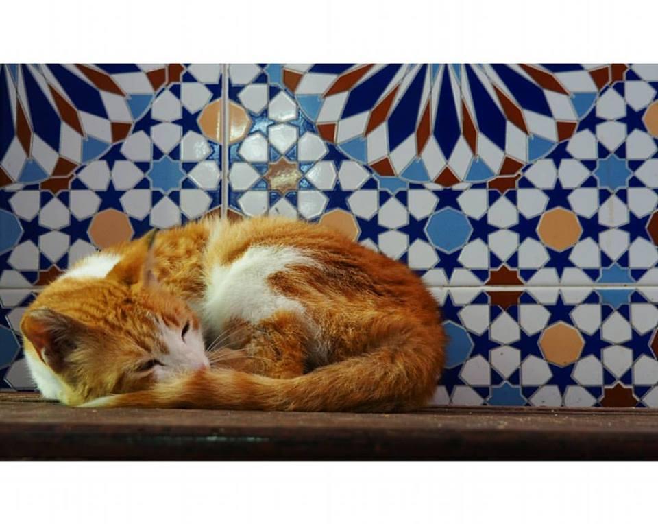 chat Maroc