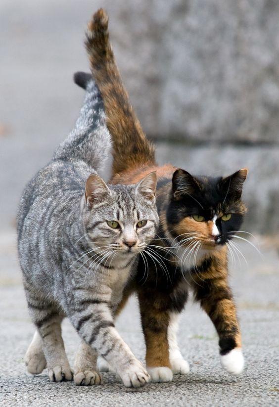 chats amis