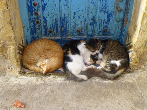 chats-essaouira