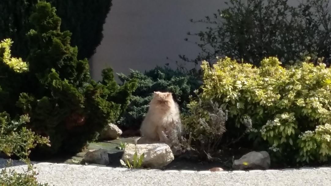 chat lion