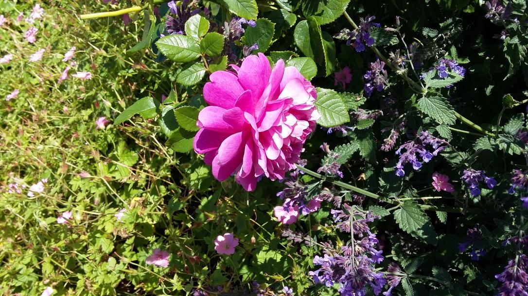 fleurs jardin Edimbourg