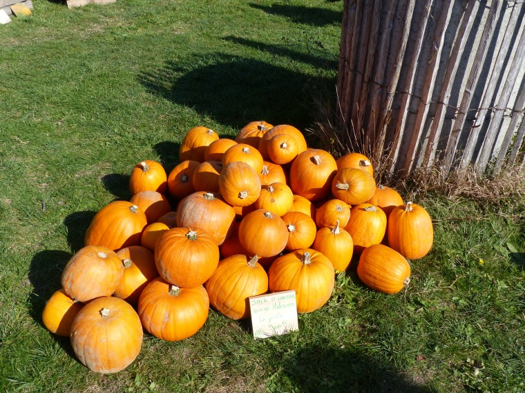Courges d'Halloween