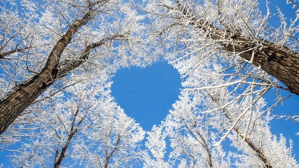 arbres coeur