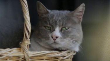 Duman Kedi