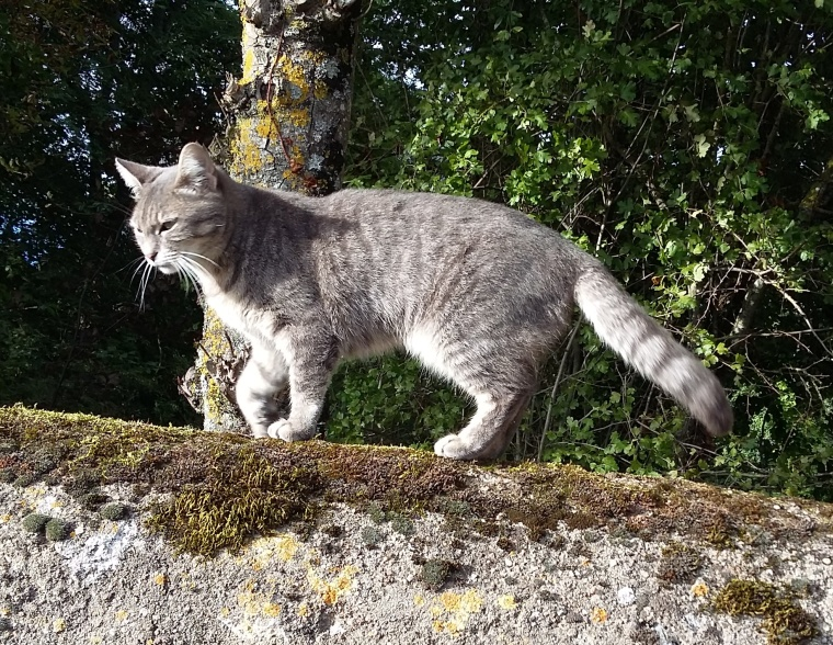 chat mur Piem