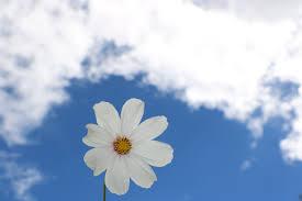 fleur et nuage