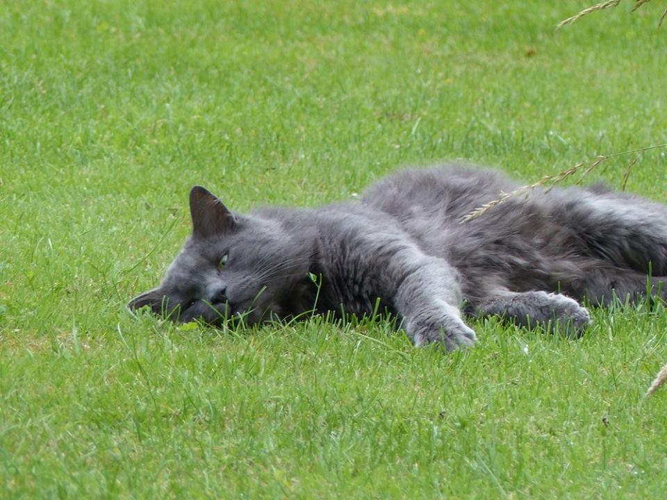 chat Edimbourg