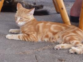 chat Stromboli