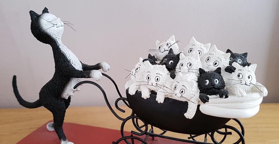 chat et landeau