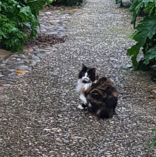 chat Ile de Ré